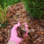 Spreading mulch | low maintenance garden