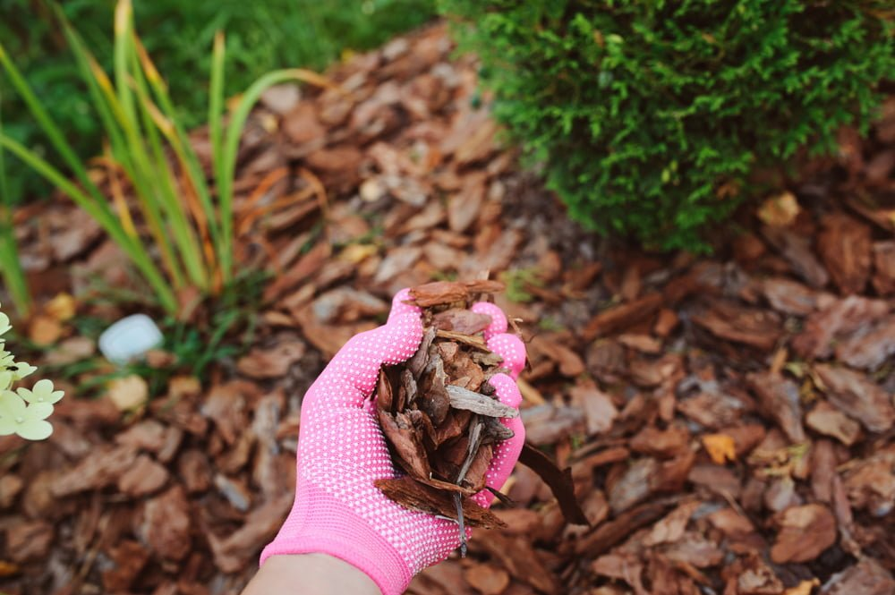 Spreading mulch | low maintenance garden