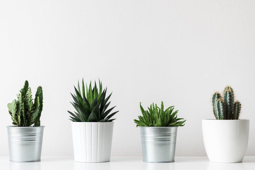 Low maintenance plants | Garden design