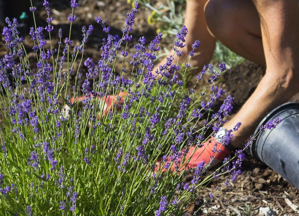 Perennials | Low maintenance garden